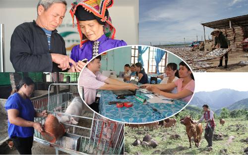 Vai trò quan trọng của Ngân hàng Chính sách xã hội trong thúc đẩy tài chính toàn diện tại Việt Nam