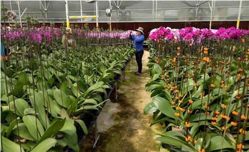 Agribank đầu tư phát triển nông nghiệp sạch, nông nghiệp công nghệ cao