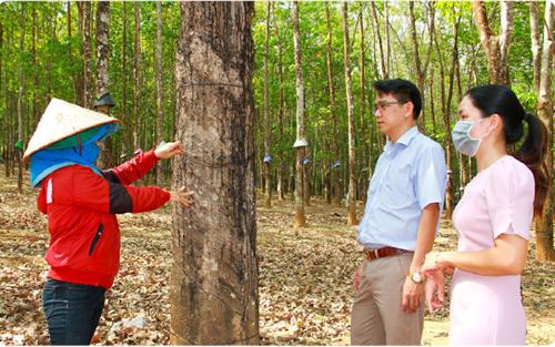 Ngân hàng Chính sách xã hội huyện Ngọc Hồi thực hiện hiệu quả vốn tín dụng chính sách