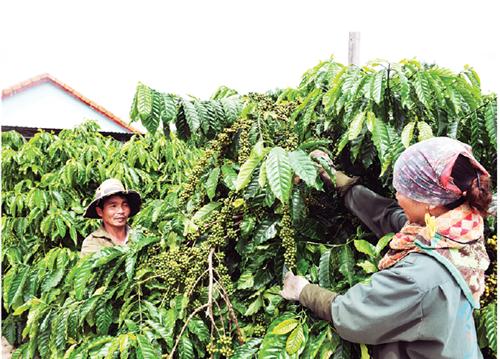Sử dụng hiệu quả vốn tín dụng chính sách tại tỉnh Kon Tum
