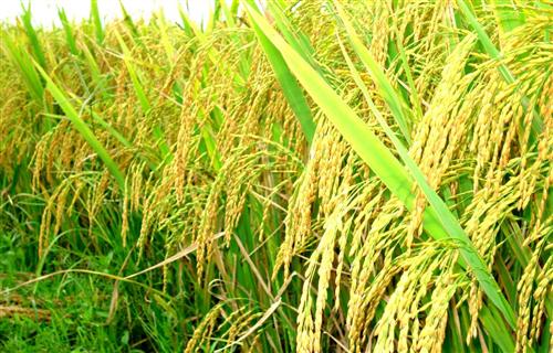 Ngân hàng với phát triển nông nghiệp, nông thôn, nông dân Việt Nam