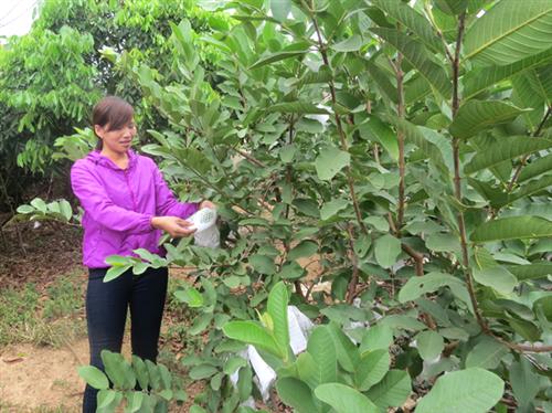 Đồng hành xây dựng nông thôn mới tại Thái Nguyên
