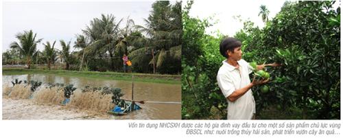 Vốn tín dụng Ngân hàng Chính sách xã hội thúc đẩy chuyển dịch cơ cấu nông nghiệp – nông thôn vùng đồng bằng sông Cửu Long theo hướng phát triển bền vững