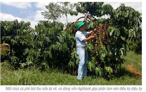 Agribank - điểm tựa cho sự phát triển  của nền nông nghiệp nước nhà