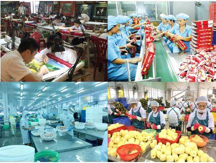 Khu vực kinh tế tư nhân trong nền kinh tế thị trường Việt Nam